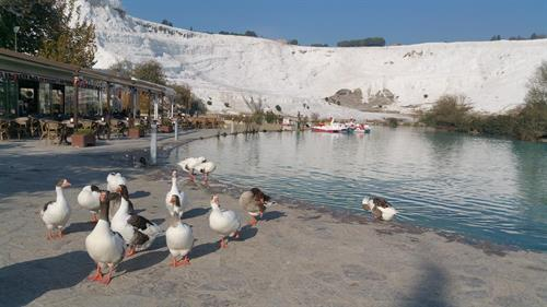 3-4 PAX PRICE $125 PP Pamukkale Private Tour from ISTANBUL by flight